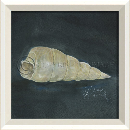 White Cottage Seashell No. 3 Framed Art