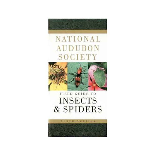 AUDBN FG: INSECTS & SPIDERS