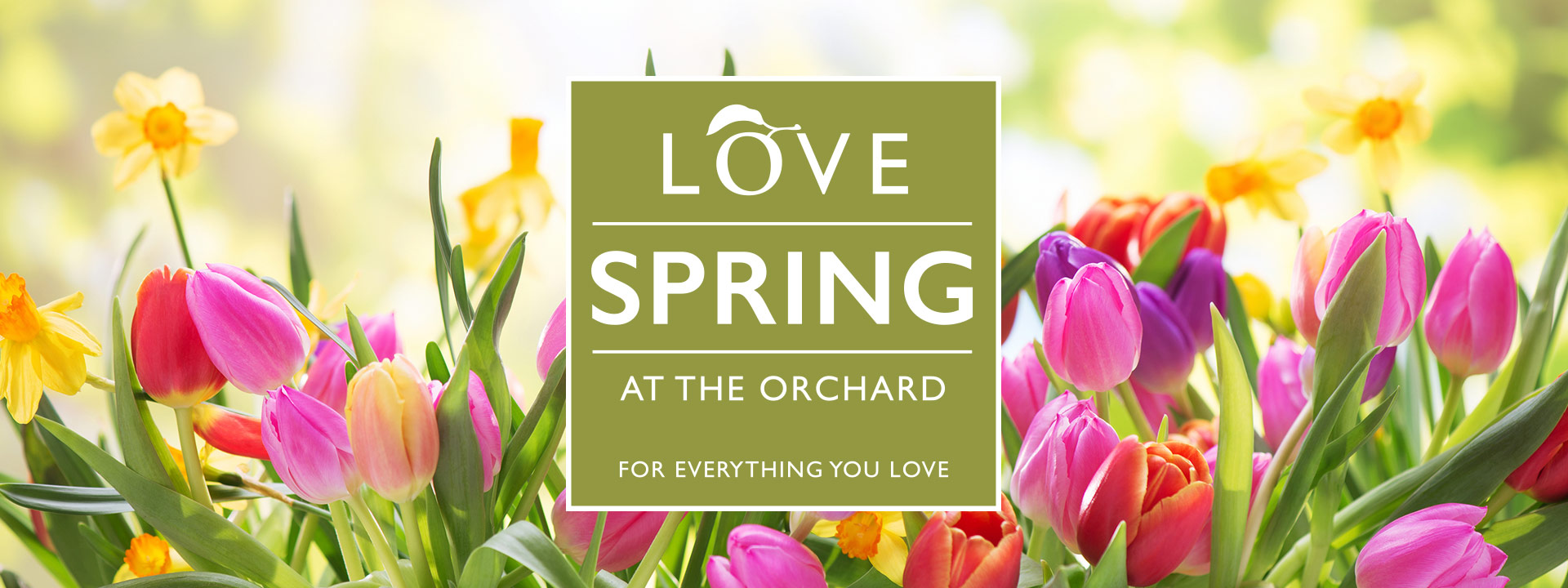 Spring At The Orchard