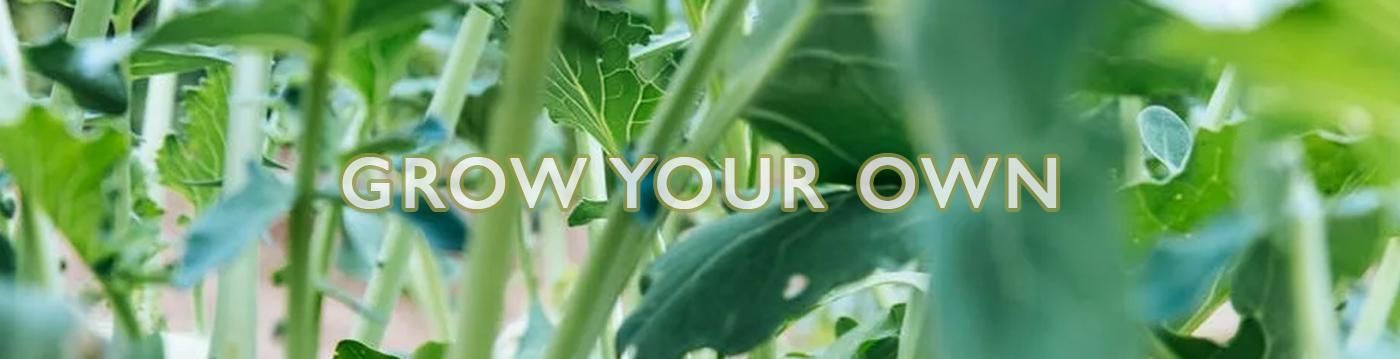 grow-your-own-main.jpg