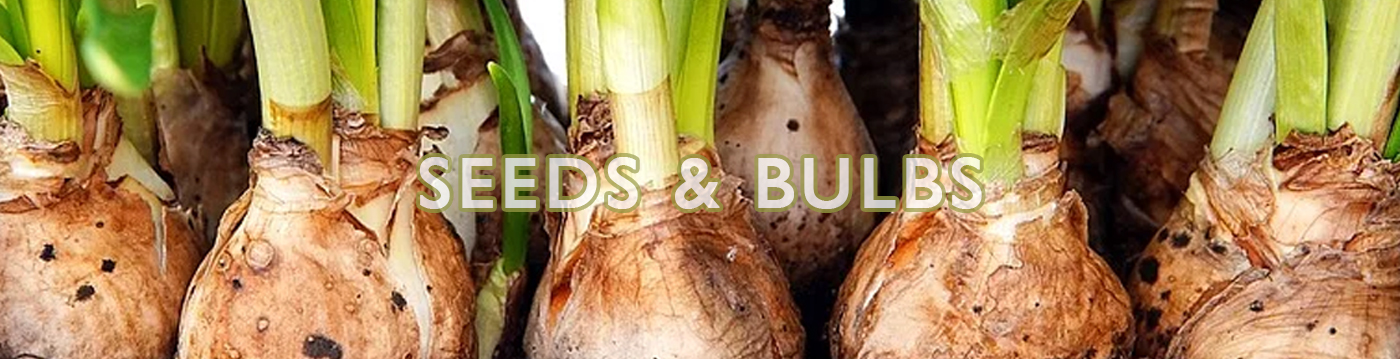 seeds-bulbs-main.jpg