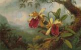 Orchids and Hummingbirds Cross Stitch Pattern - Martin Johnson Heade
