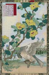 Goshawk, Hibiscus Cross Stitch Chart - Bairei Kono