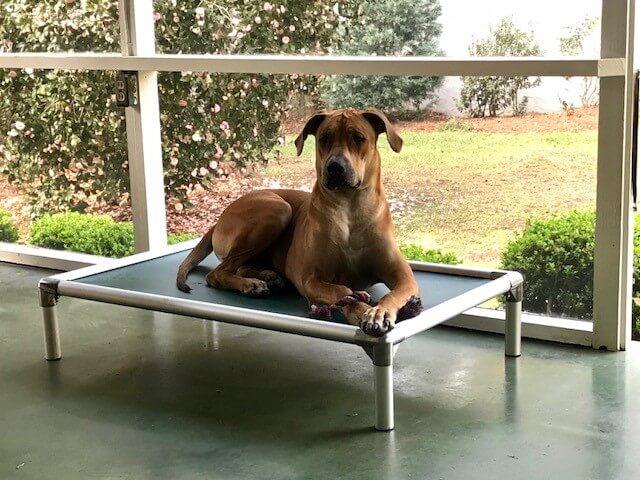 Aluminum Dog Bed Kuranda Pro