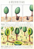 Codex Seraphinianus by Luigi Serafina, Deluxe Author Signed Limited Edition