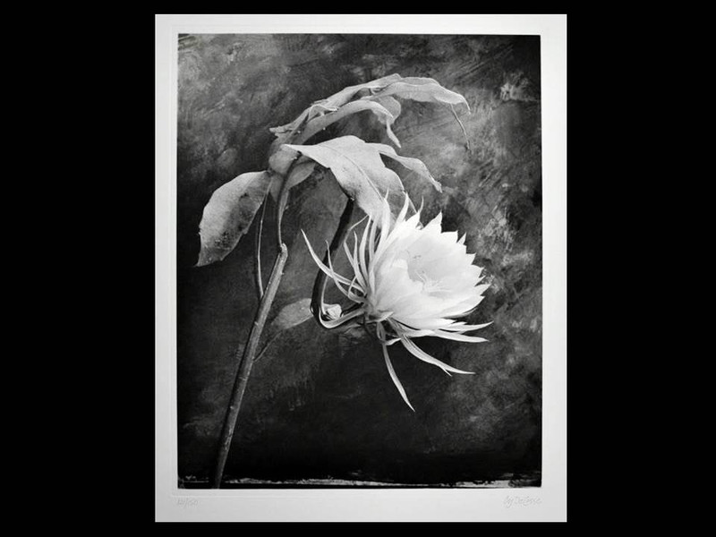 Cy DeCosse: Queen of the Night, Signed Limited Edition Print