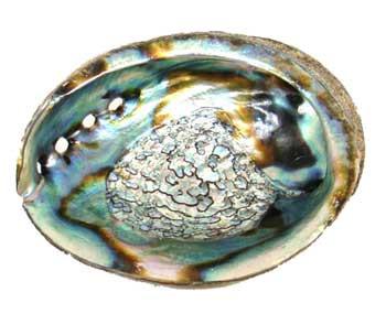 "3"" - 4"" Abalone Shell Incense Burner"