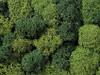 Lichen Green Mix
