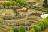 Classic Grasslands Game Mat 5x7