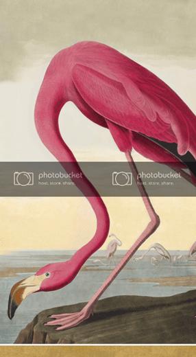 Hand Towels or Paper Towels Party Supplies Audubon Birds Pk 30