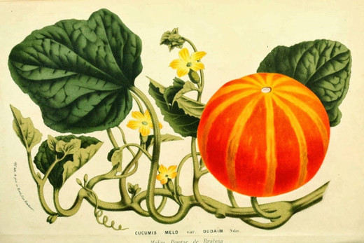 Pumpkin Decor Orange Paper Placemats Pk 24