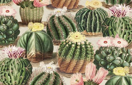 Cactus Décor Paper Placemats Cactus Pak 24