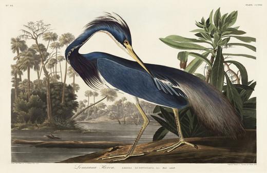 Blue Heron Paper Placemats Pak 24