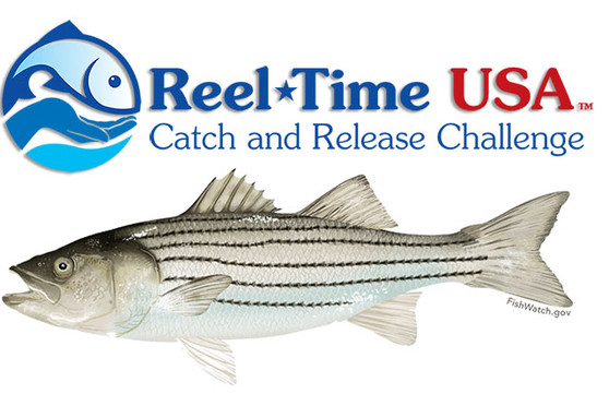 Nationwide Catch and Release Striper Challenge November 20th 2021