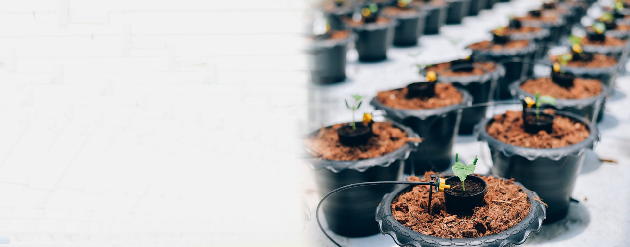 Hydroponic Watering Systems