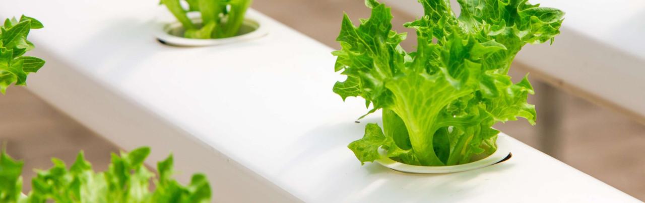 No Soil Gardening – Hydroponics, Bioponics, Aeroponics, Aquaponics and Vermiponics Explained