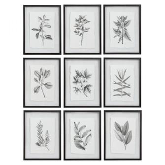 Uttermost Farmhouse Florals Framed Prints, S/9 (85 41617)