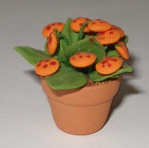 2241 - Plant: Pocketbook Plant - Orange