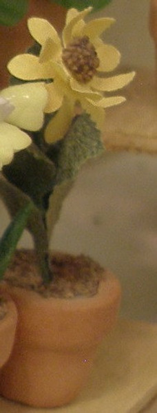 940 - Plant:  Sunflower