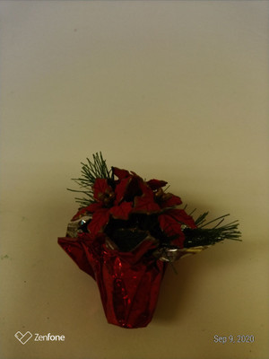 Poinsettia in Red Paper Wrapped Pot