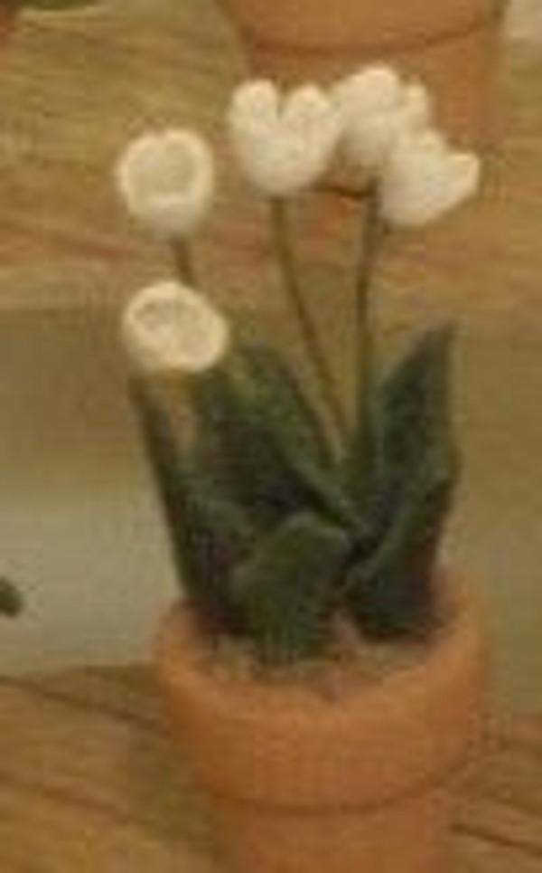 2245 - Plant: Tulip