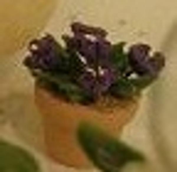 Violet - Dark Purple