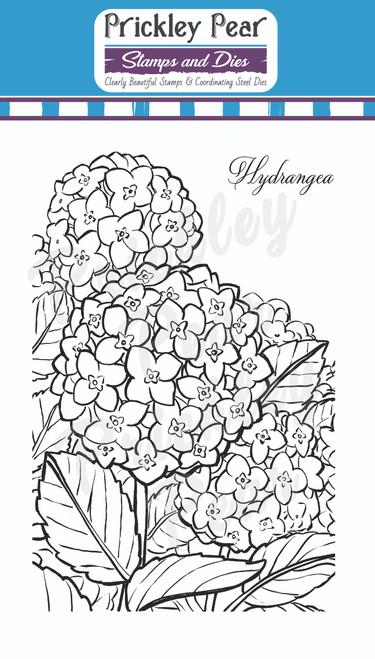 Sketched Florals - Hydrangea CLR244