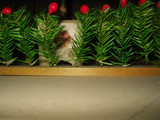 Old Vintage Holiday Christmas 1920 1930 Feather Tree Berry Hedge Fence