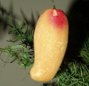 Vintage 1950 Molded Foam Fruit Christmas Holiday Tree Ornament
