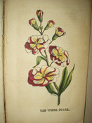 1850 Victorian Parlor Annual Botanical Woodcut Prints
