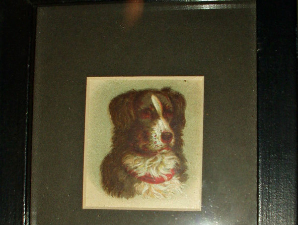 Framed Early 1900  Lithograph Old Paper Scrap Dog Print