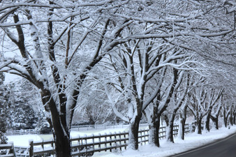 Photo - Snow Trees