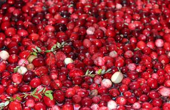 Photo - Harvest Cranberry