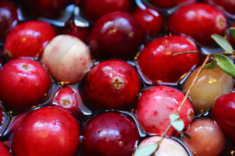 Photo - Harvest Cranberries