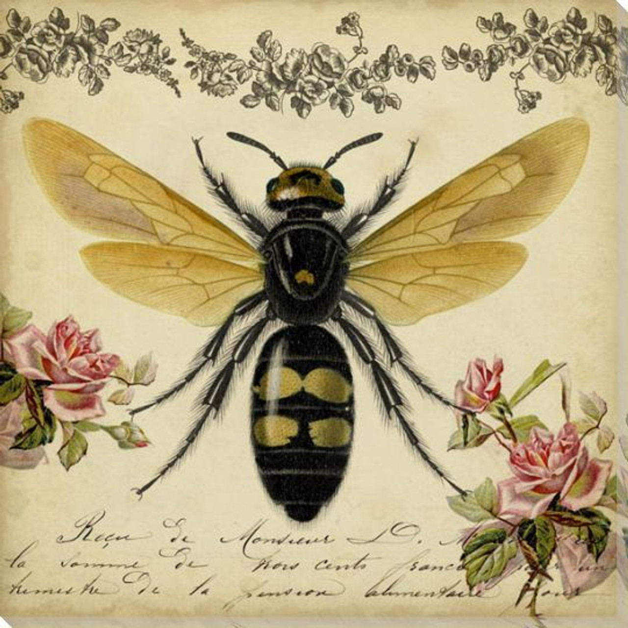 Insect & Bugs Art Prints