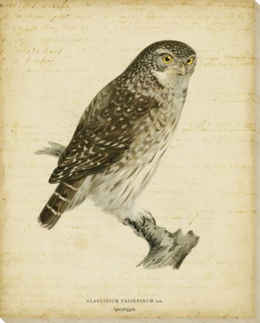 Vintage Owl Bird Wrapped Canvas Giclee Print Wall Art Wall Decor Artwork
