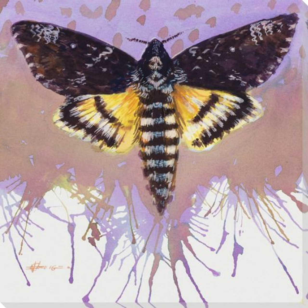 Deaths Head Hawk Moth Wrapped Canvas Giclee Print Wall Art - Wall Decor -  Artwork