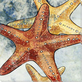 Sea Life Art Prints