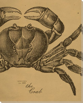 Crab Etching Wrapped Canvas Giclee Print Wall Art