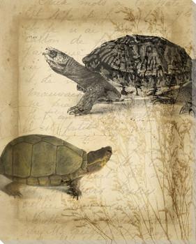 Tandem Tortoise II Wrapped Canvas Giclee Print Wall Art