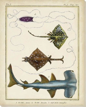 Antique Rays & Fish I Wrapped Canvas Giclee Print Wall Art