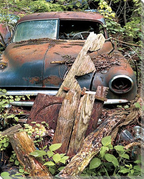 Car Hidden Away in Plants and Old Wood Wrapped Canvas Giclee Art Print