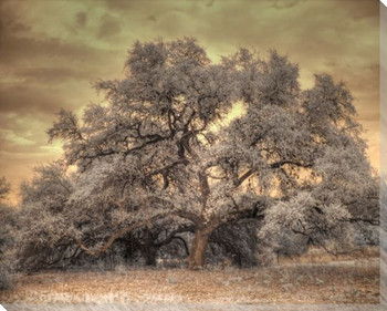 Oak Tree Wrapped Canvas Giclee Print Wall Art
