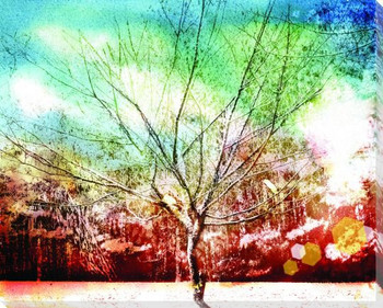 Solo tree Wrapped Canvas Giclee Print Wall Art