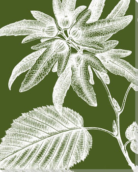 Botanical Etching V Wrapped Canvas Giclee Print Wall Art
