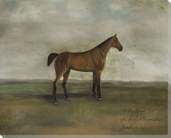 A Bay Hunter Horse Wrapped Canvas Giclee Print Wall Art