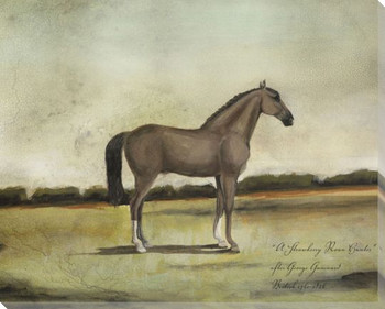 A Strawberry Roan Hunter Horse Wrapped Canvas Giclee Print