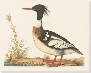 Duck Bird Wrapped Canvas Giclee Print Wall Art