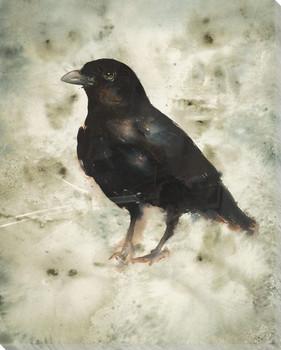 Sheryl Bird Wrapped Canvas Giclee Print Wall Art