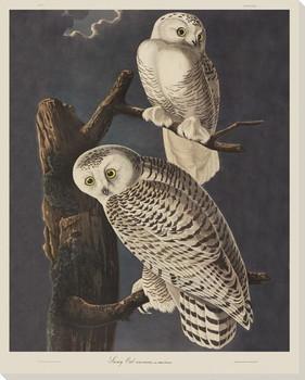 Snowy Owl Birds Wrapped Canvas Giclee Print Wall Art